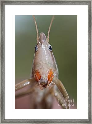 Do I Bug You Framed Print by Gary Bridger