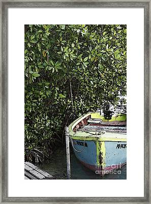 Framed Print featuring the photograph Docked By The Mangrove Trees by Lilliana Mendez