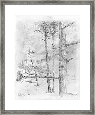Douglas Fir Framed Print