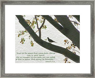Dove Silhouette On Tree Framed Print