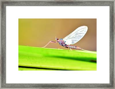Dragonfly Framed Print by Tommytechno Sweden