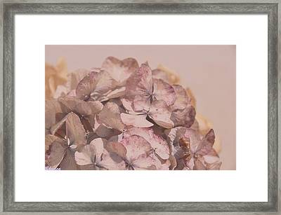 Dried Softness Framed Print