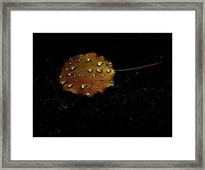 Drops On Autumn Leaf Framed Print