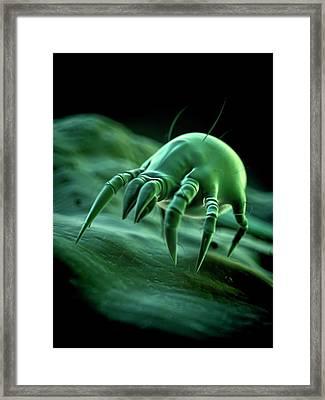 Dust Mite Framed Print