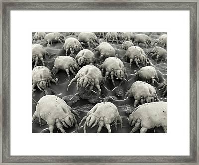 Dust Mites Framed Print by Juan Gaertner