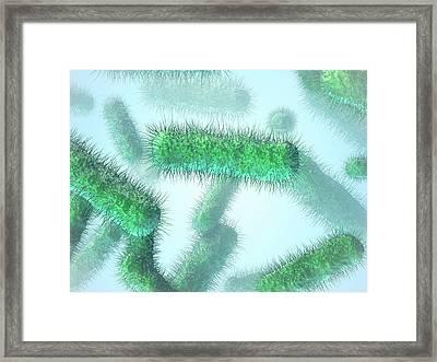 E. Coli Bacteria Framed Print by Maurizio De Angelis