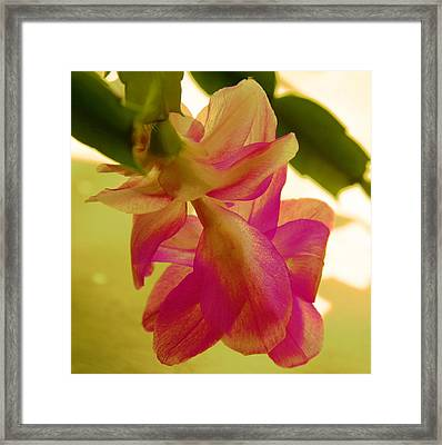 Easter Cactus Framed Print by Christiane Schulze Art And Photography