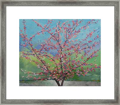 Eastern Redbud Tree Framed Print by Michael Creese