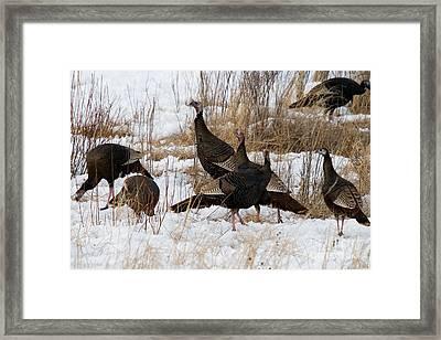 Eastern Wild Turkeys Framed Print by Linda Freshwaters Arndt