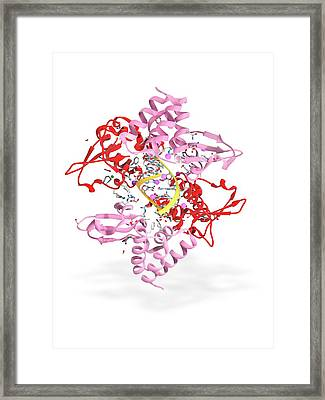 Ebola Viral Protein 35 And Rna Framed Print