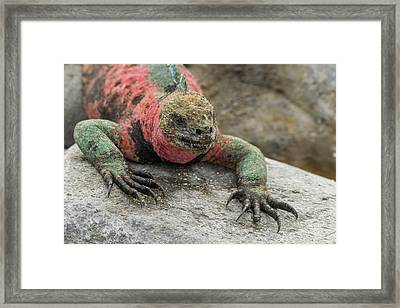Ecuador, Galapagos National Park Framed Print