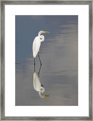 Egret Standing Framed Print