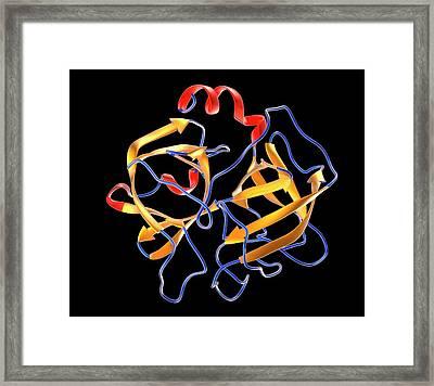 Elastase Molecule Framed Print