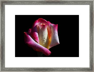 Elegance Framed Print by Doug Norkum