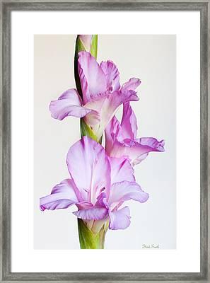 Elegance Framed Print by Heidi Smith
