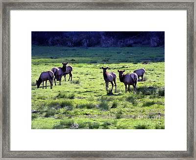 Elk Or Wapiti Framed Print by Larry Stolle
