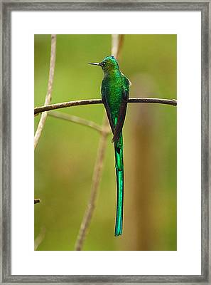 Emerald Glow Framed Print