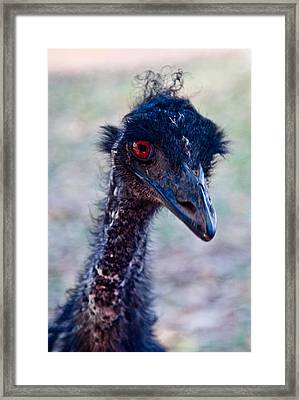 Emu Framed Print