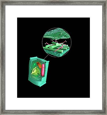Eukaryotic Cell Structure Framed Print by Mikkel Juul Jensen