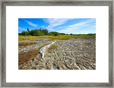 Everglades Coastal Prairies Framed Print