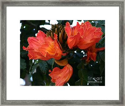 Exotic Flowers Framed Print