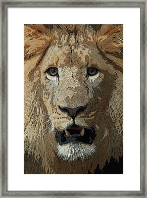 Framed Print featuring the photograph Eye Contact by Joseph G Holland