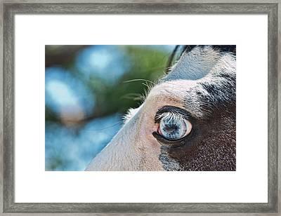 Eye Of The Beholder Framed Print by Frank Feliciano