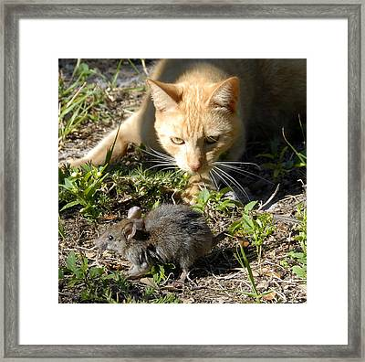 Eye Of The Tiger Framed Print by David Lee Thompson