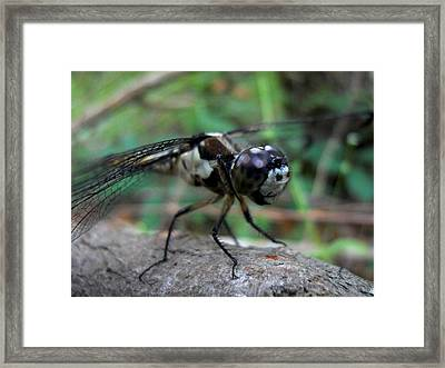 Eye See You Framed Print by Maggy Marsh