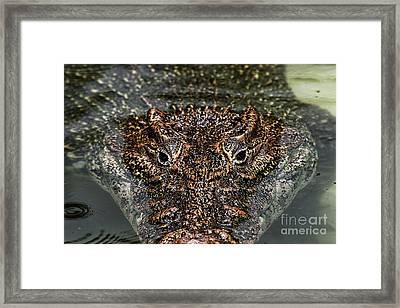 Eyes Of A Killer Framed Print by John Rizzuto