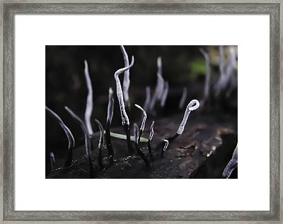 Fairy Fingers Framed Print