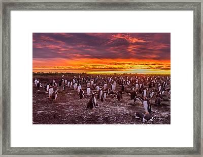 Falkland Islands, Sea Lion Island Framed Print by Jaynes Gallery