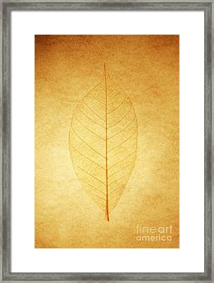 Fall 2010 Framed Print by Tony Cordoza