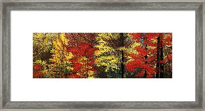 Fall Canopy Framed Print