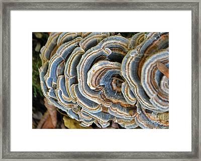 Fall Stripes Framed Print
