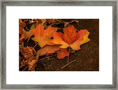 West Fork Fallen Leaves Framed Print