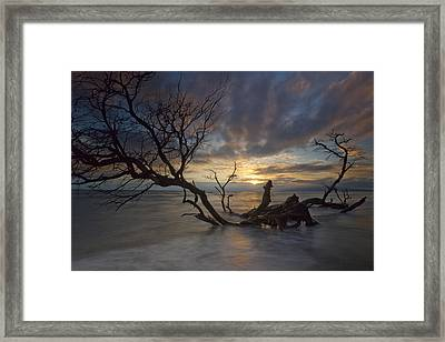 Fallen Tree Framed Print by James Roemmling