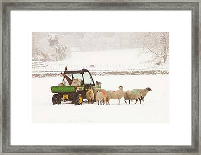 Farmer Feeding Sheep In Winter Framed Print
