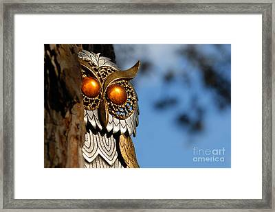 Faux Owl With Golden Eyes Framed Print by Amy Cicconi