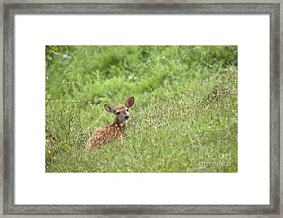Fawn Framed Print by Jeannette Hunt
