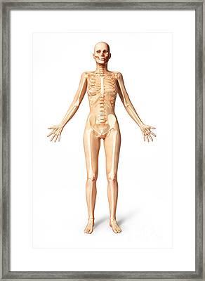 Female Standing, With Skeletal Bones Framed Print