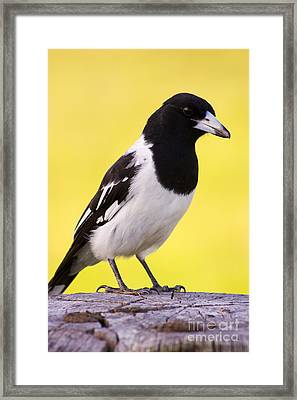 Fencepost Magpie Framed Print by Jorgo Photography - Wall Art Gallery