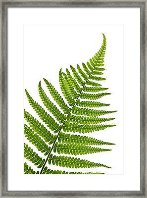 Fern Leaf Framed Print by Elena Elisseeva