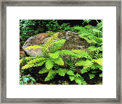 Fern Leaves And Rock In A Forest, Swift Framed Print