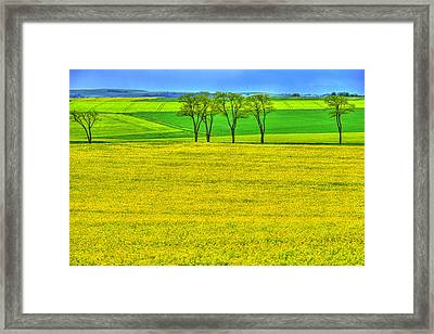 Fields Of Dreams Framed Print by Midori Chan