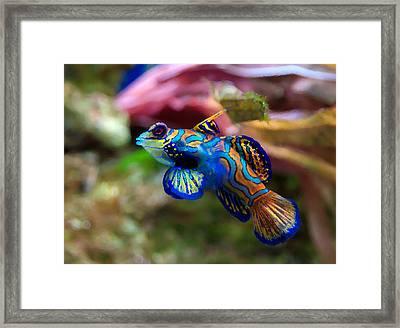 Fish Paintings Framed Print by Nicole Gardner