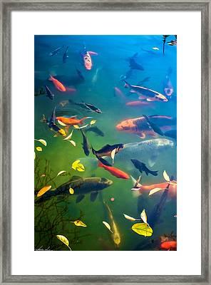 Fish Pond Framed Print