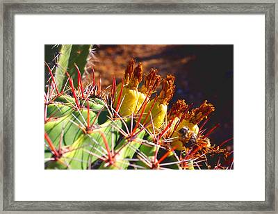 Framed Print featuring the photograph Fishhook Cactus by David Rizzo