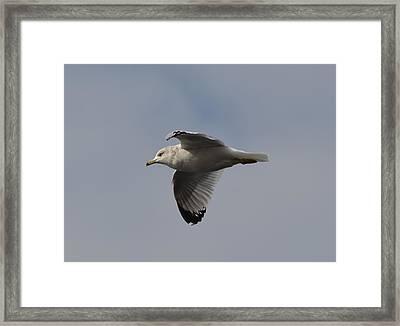 Flight Framed Print