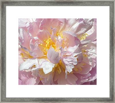 Framed Print featuring the photograph Flirtatious Pink by Lilliana Mendez